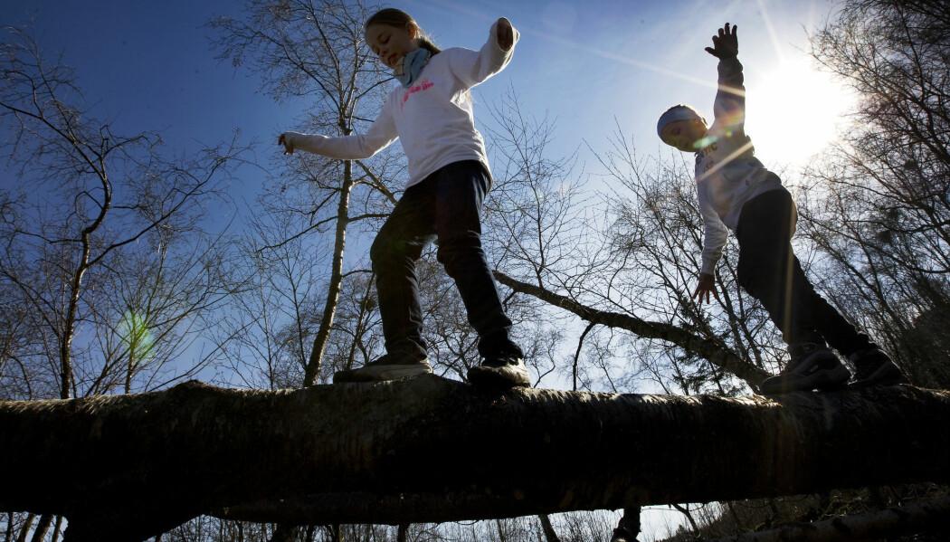Når rota på treet er revet opp av bakken er det farlig å være i nærheten. Det kan være store krefter i et slikt tre.