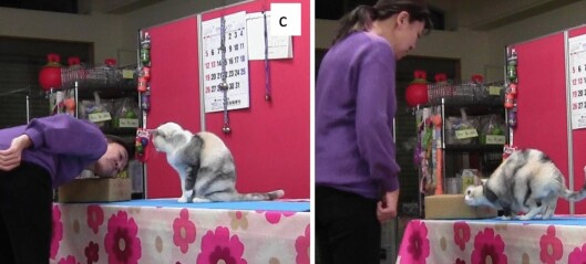 En hundetrener klarte å trene opp en katt. Da kom forskerne
