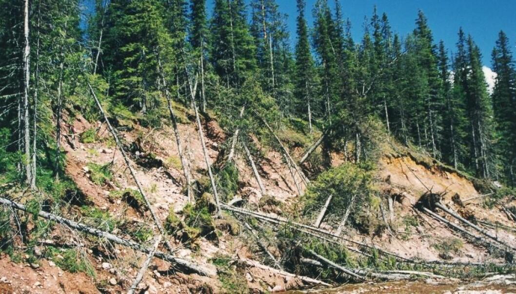 Jordskredsområde, to år etter, i Sverige. Curt Fredén, SGU
