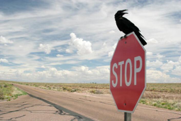 Fugler kan lære døden på veiene ved å lære seg fartsgrensa. (Illustrasjonsfoto: iStockphoto.com)