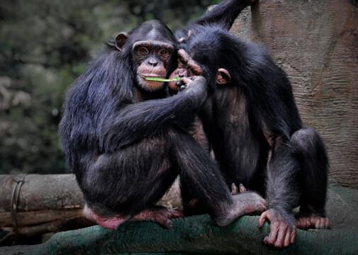 Kommer dyr også i puberteten?