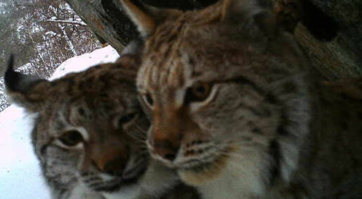 Gauper tok selfie med viltkamera