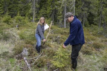 Skogstatistikken er basert på data som er innsamlet i felt av trenede inventører. (Foto: John Y. Larsson / Skog og landskap)