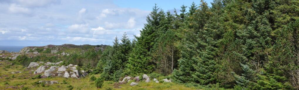 Søkelys på skogplanting