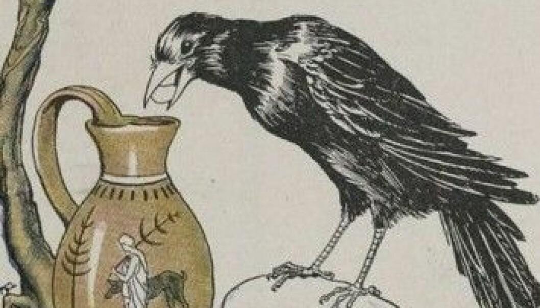 """I en moderne versjon av gåten """"Kråka og krukka"""" må barn bli hele åtte år gamle før de blir bedre enn fuglen på å løse gåten. (Bilde: Wikimedia Creative Commons)"""