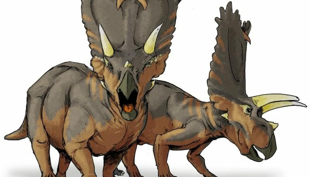 Slik tror forskere at dinosauren Pentaceratops så ut. Men de kan bare finne hudavtrykk og knokler fra dinosaurene - selve kroppen er for lengst råtnet bort. Wikimedia commons
