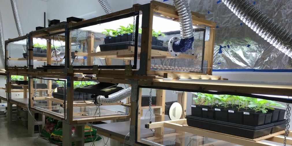 Anne Hope Jahren har undersøkt hvordan planter tilpasser seg CO2-innholdet i lufta.