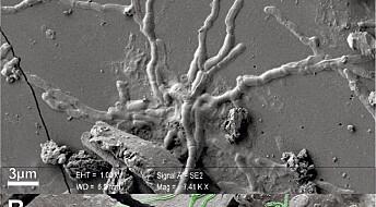 Forskere fant 2000 år gamle hjerneceller