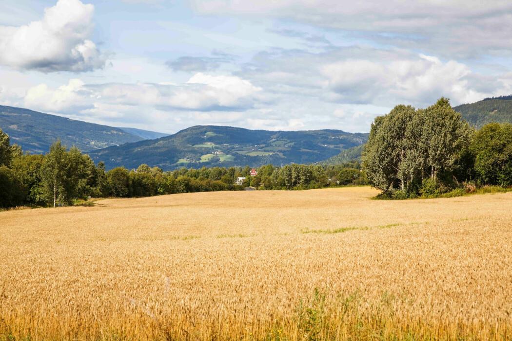 Den dominerende årsaken til økningen av lystgass (N2O) i atmosfæren er utslipp knyttet til landbruk.