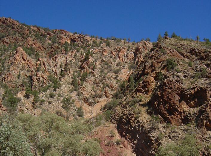 Rød kvartsitt, omdannet sandstein i Brachina Gorge i Syd-Australia kan være rester av jord som ble dannet i Ediacara for over 540 millioner år siden. I så fall vil fossilene her ha levd på land, ikke i vann som hittil antatt. (Foto: G. Retallack)