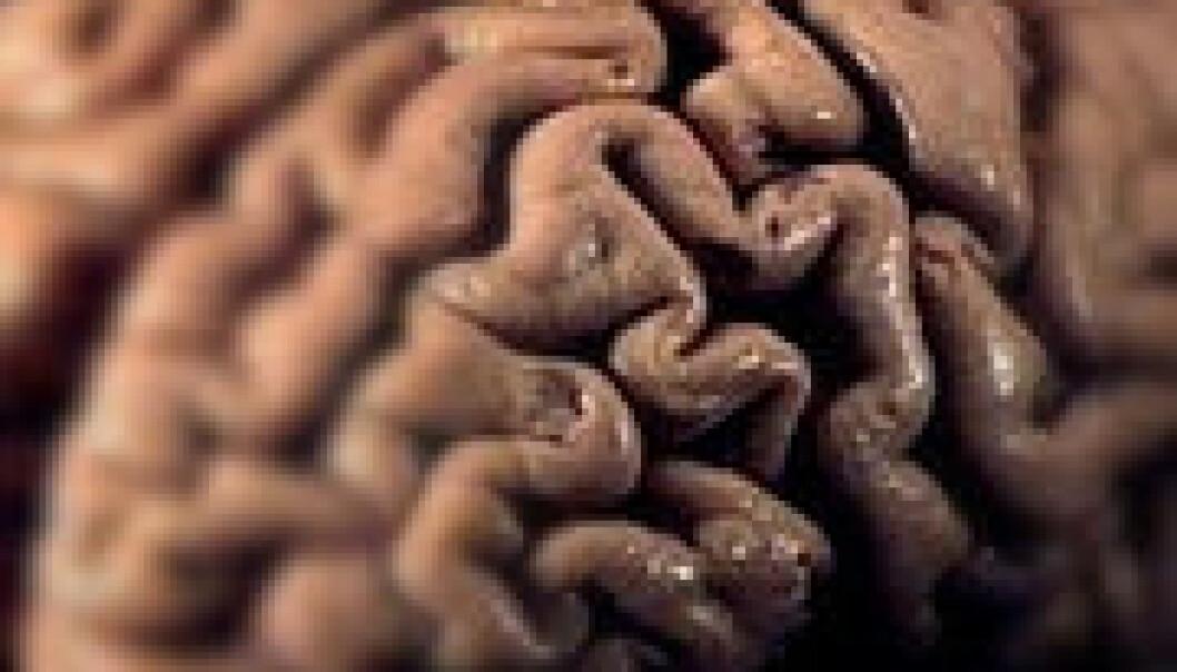Sjokolade gir mer hjernekraft