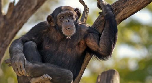 Dyr med naboer er smartere, ifølge studie