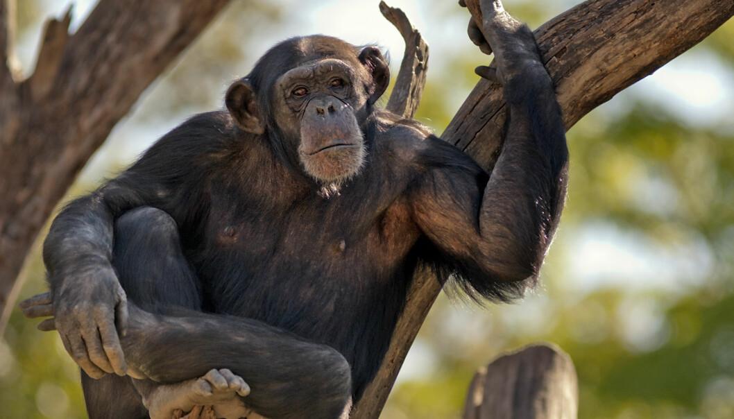 Naboer kan være på godt og vondt både hos folk og dyr; og i dyreriket byr de på en miks av utfordringer og muligheter. Britiske forskere mener dyr som tidvis omgås samme art utenfor sin egen flokk, er smartere.