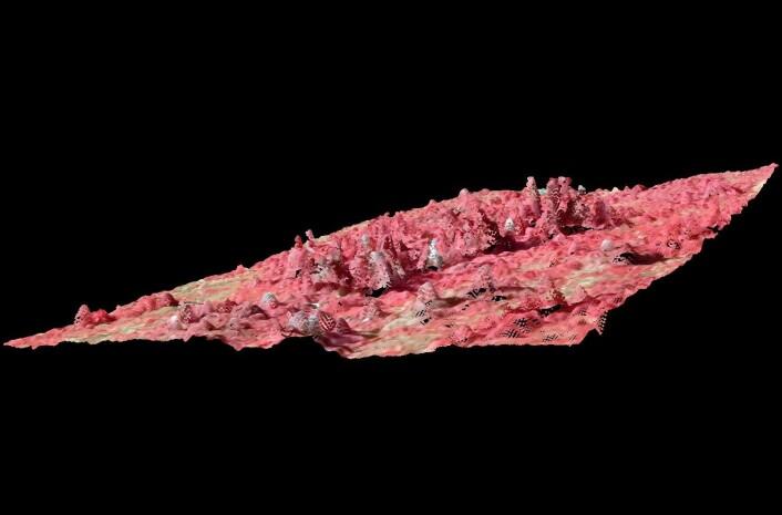 Her er skogen presentert med kunstige farger som en tredimensjonal punktsky basert på overlappende flyfotografier i farger og infrarødt. (Foto: (Illustrasjon: Johannes Breidenbach/Skog og landskap))