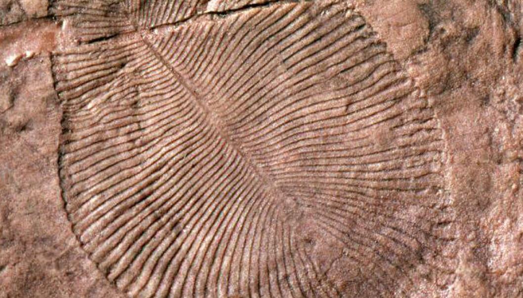 Fossil av Dickinsonia, primitiv livsform fra Ediacara. Nå mener den amerikanske forskeren Gregory Retallack at steinen omkring denne organismen var jord. Dette viser ifølge Retallack at den levde på land, ikke i vannet. G. Retallack