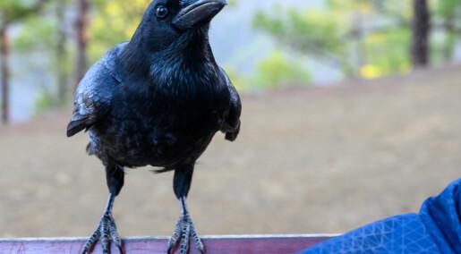 Fuglers hjerner minner mer om menneskers enn forskerne har trodd, avslører skanninger