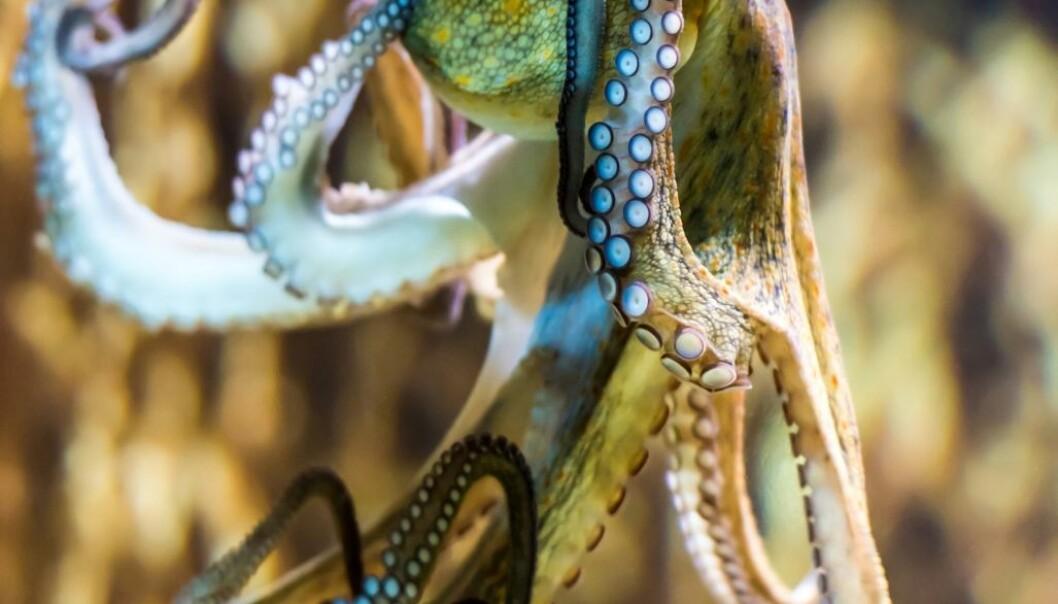 Slik unngår blekkspruten floker