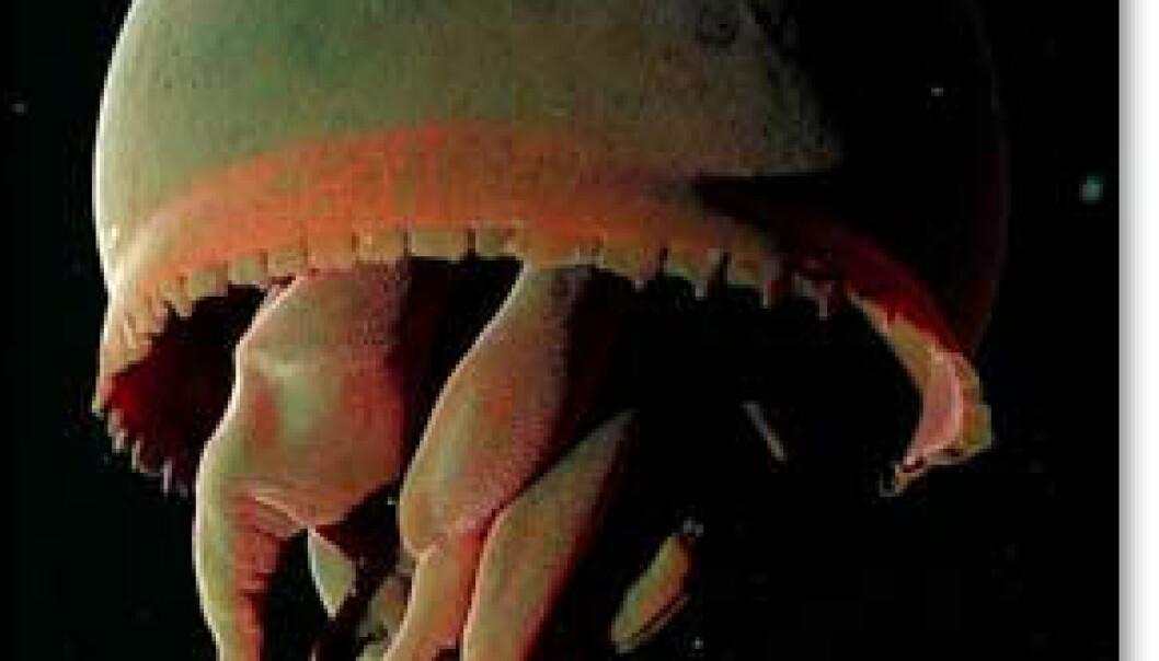 Monstermanet funnet utenfor California