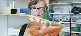 Ikke kjøp gulrøtter som ligger i romtemperatur i butikken