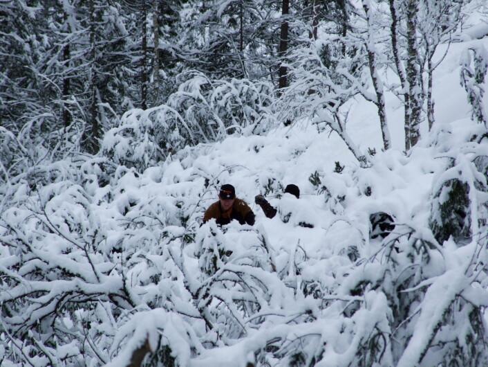 Det er tungt arbeid å jobbe i norske skoger. (Foto: Nils Olaf Kyllo)