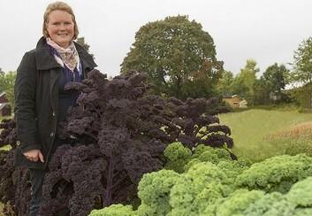 Stipendiat Helle Olsen har funnet at det er mer sunne næringsstoffer tilgjengelig i rå grønnkål enn i kokt, og flere i de grønne enn i de røde variantene. (Foto: Kjell Merok, Nofima)