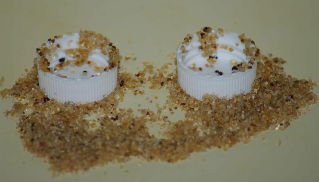 Maurene gjorde et lurt triks med sandkorn for å få tak i mat.