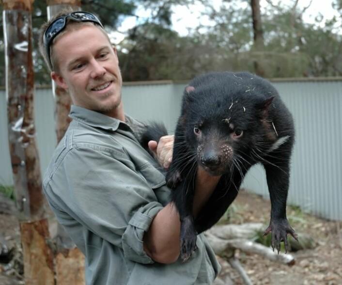 Dyrehageansatt og avlsansvarlig, Tim Faulkner, holder en Tasmansk djevel. (Foto: Stephan C. Schuster, Penn State University)