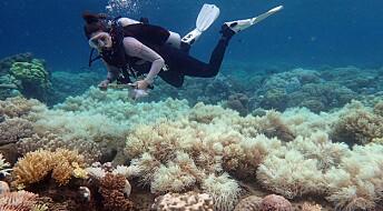Great Barrier Reef har mistet halvparten av korallene, viser studie
