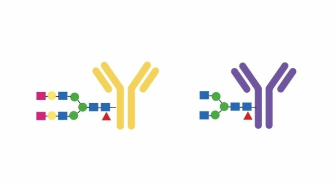 Found two errors. The research showed that patients with perforated skeletons were missing two sugar molecules at the end of a long chain inside the antibody.