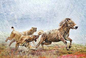 Hvordan jaktet de utdødde sabeltann-kattene?