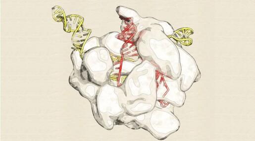 Så langt har forskere kommet med å bruke gensaksen CRISPR på mennesker