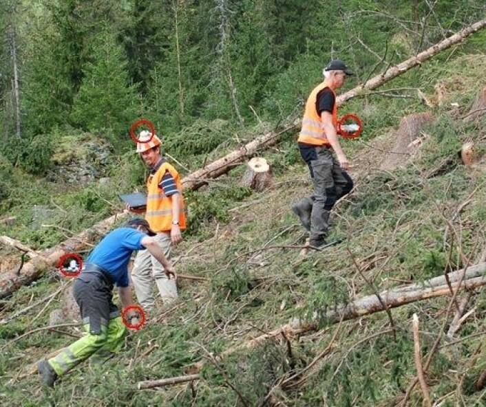 Dette er forskning med levende forsøkspersoner: skogsarbeideren (i blå t-skjorte) prøver ut mens to forskere tar tiden og observerer. (Foto: Morten Nitteberg)