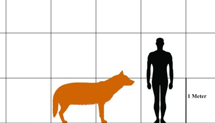 Skrekkulven sammenlignet med menneske.