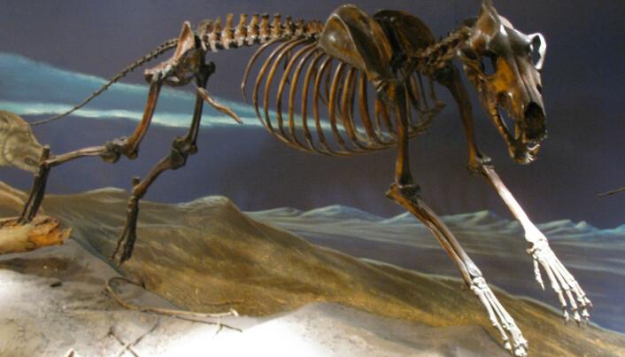 Skjelletene fra tjæregropene i La Brea er stilt ut i eget museum.