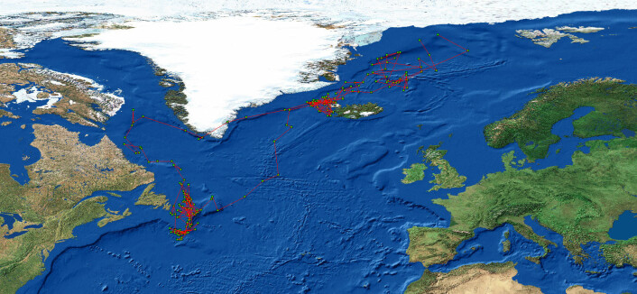 Kart med eksempel på posisjonsdata fra en lyslogger. Hver grønne prikk representerer fuglens omtrentlige posisjon en gitt dag i året. (Foto: Norsk polarinstitutt)