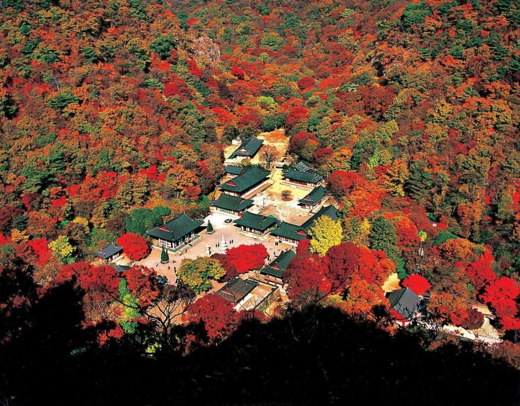 – Etter Koreakrigen på 1950-tallet, var Sør-Korea ødelagt av krig og fattigdom. Skogene var fullstendig hugget ned, tømmeret var brukt til brensel. For å fikse skogene, satte myndighetene i gang en ny kampanje. Skogplantingskampanjen begynte på 70-tallet, og etter noen tiår med iherdig innsats, ble landet grønt igjen, skriver Hanna Lee.