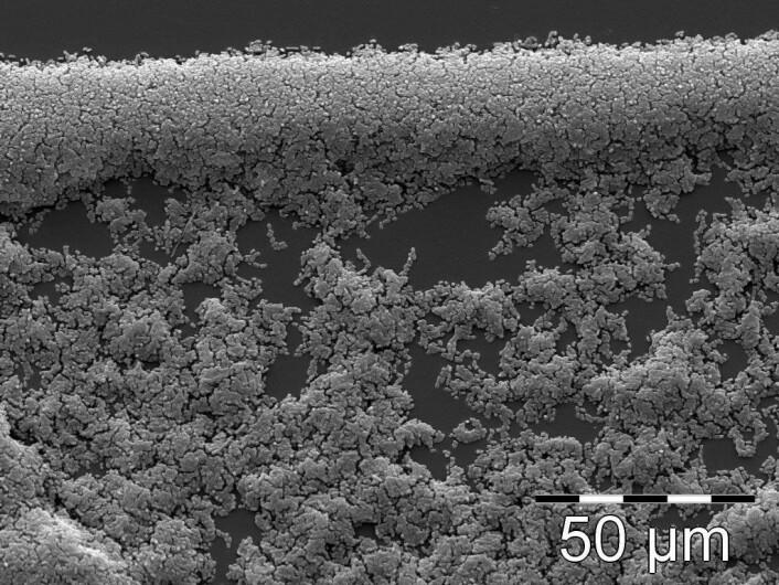 Biofilm av E. coli-bakterier, sett i et scanning elektron-mikroskop. (Foto: Ingun Lund Witsø/Steinar Stølen)