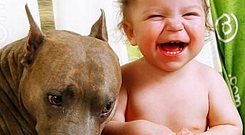 Dyrehold gir ikke astma hos barn