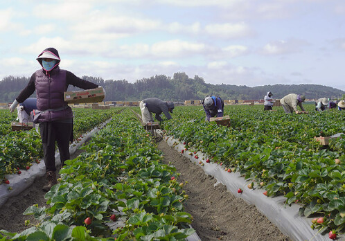 European migrant workers are marginalized, invisible and exploited - and Europe is completely dependent on them