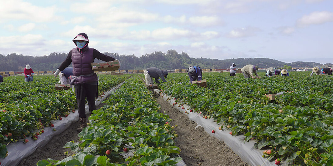 Europe is estimated to have 5.5 million migrant workers, and the number may well be higher.