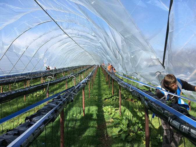 The researchers believe Europe is on the same course as the United States in terms of the industrialization of agriculture.