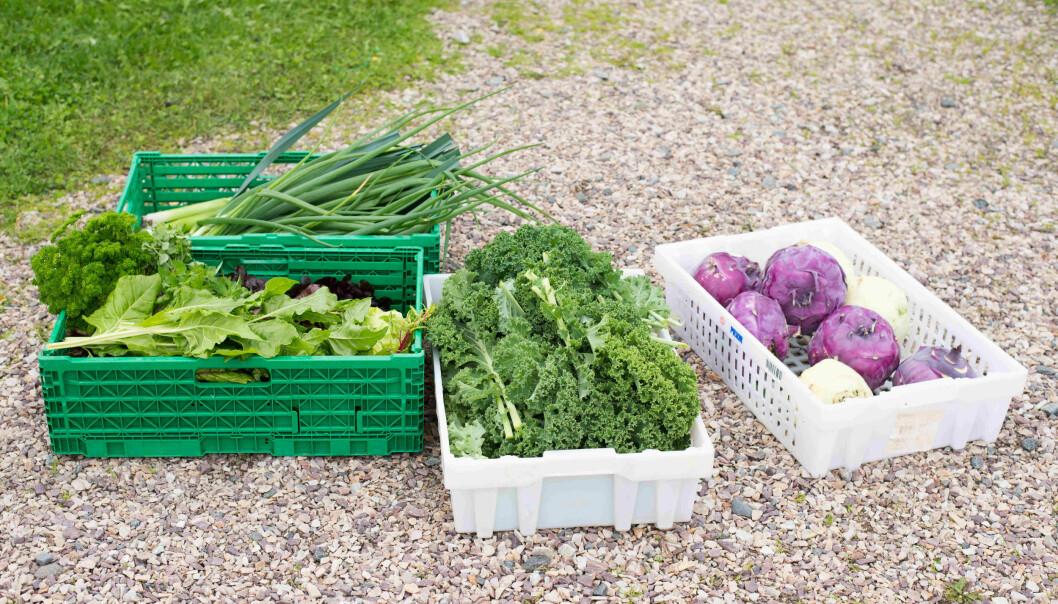 I starten av vekstfasen trenger en rekke grønnsaker og alle typer blomster å vokse i jord som er blandet med torv.
