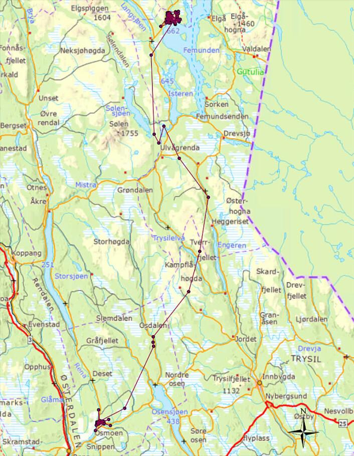 Kartet viser revens vandring fra 11. november fram til 14. desember 2011. (Foto: (Figur: Høgskolen i Hedmark))