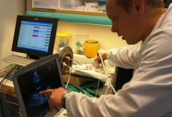 Gaustad viser de hvite flekkene på ultralyden. Det er alt for mye bobler i blodet til rotta, særlig siden hun fortsatt er nedkjølt. (Foto: Hanne Jakobsen)