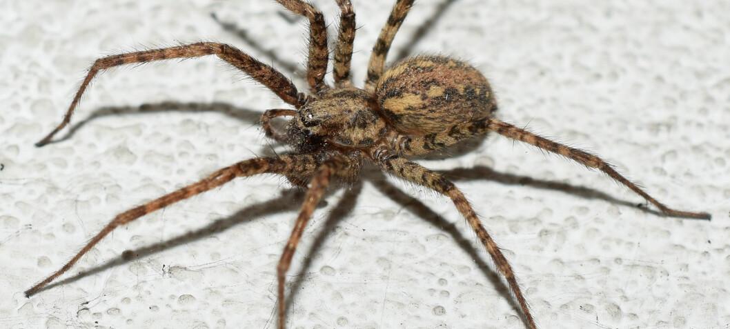 Media er medskyldig i folks edderkoppfobi, ifølge italienske forskere