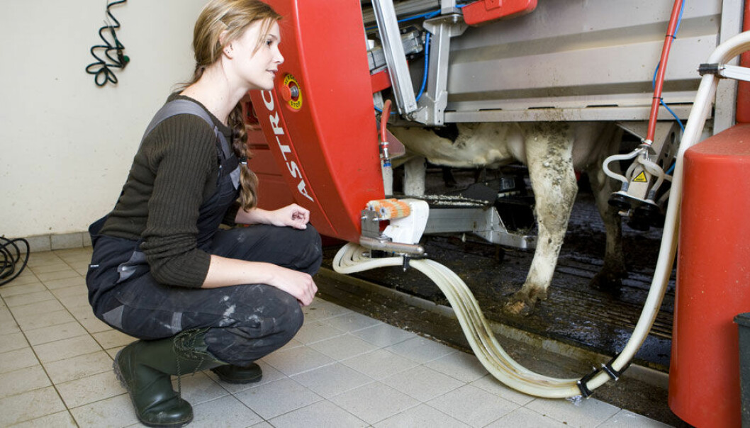 I automatiske melkeroboter kan kua selv velge når den vil melkes uten at mennesker er involvert i det hele tatt. Colourbox.com