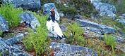 Det blir nå flere ryper i Norge
