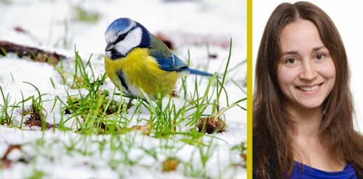 Klimaendringer kan gjøre det vanskelig for dyr å ta smarte valg