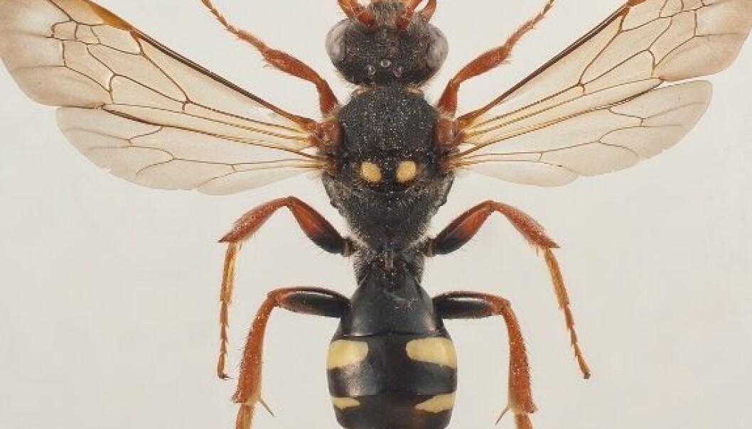 Kunnskapsløft for norske bier