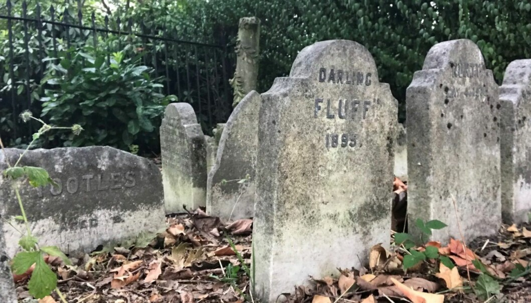 Her ligger hunden Fluff, død 1895. Bildet er fra kjæledyrskirkegården i Hyde Park i London.